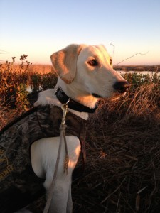 Abbey_s First Hunt