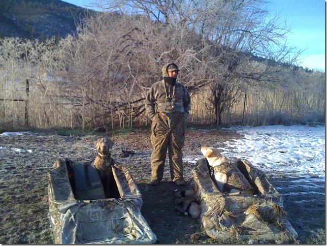 Brie hunts geese